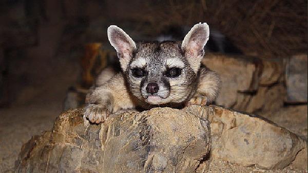 """盘点世界上最奇特哺乳动物:夜猴""""叽叽喳喳"""""""