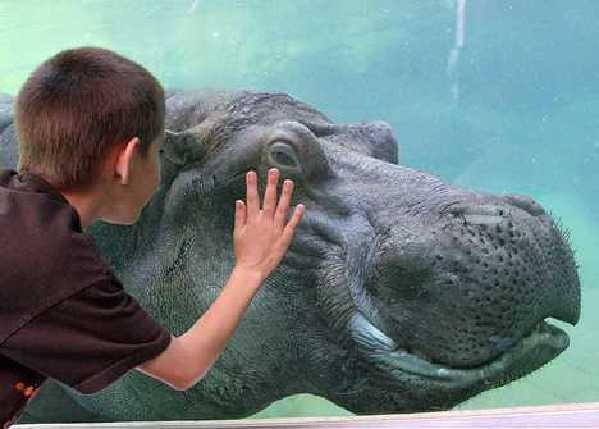 盘点动物微笑的可爱瞬间:猛兽的另一面(图)