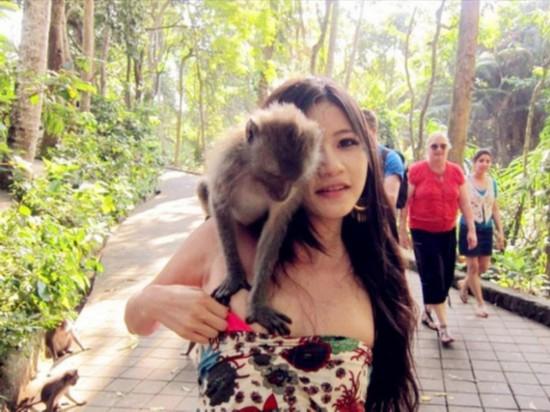 盘点动物袭击人类尴尬瞬间:猴子摸美女胸/图