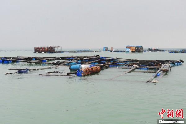 广东惠州遭受台风 天兔 重创 经济损失严重