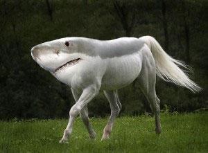 搞笑的动物杂交 动物界繁殖出来的那些异类图片