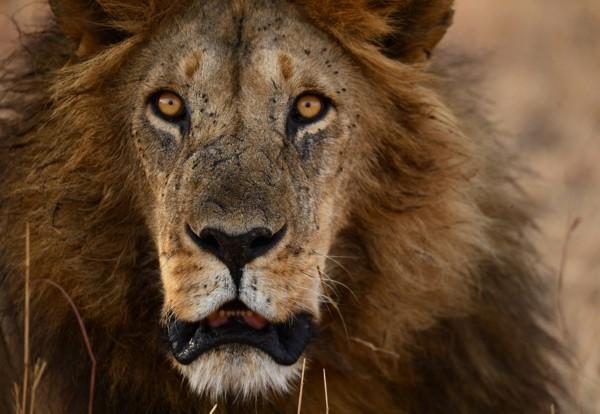 摄影师非洲大草原体验生命之旅