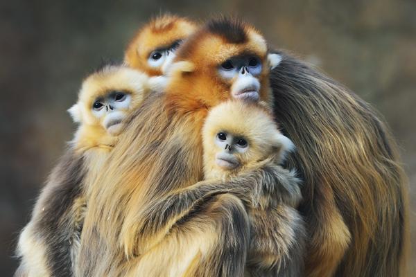 中国三星陕西开展濒危动物保护