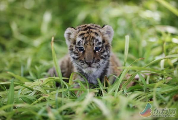 野生动物园萌兽成群迎六一