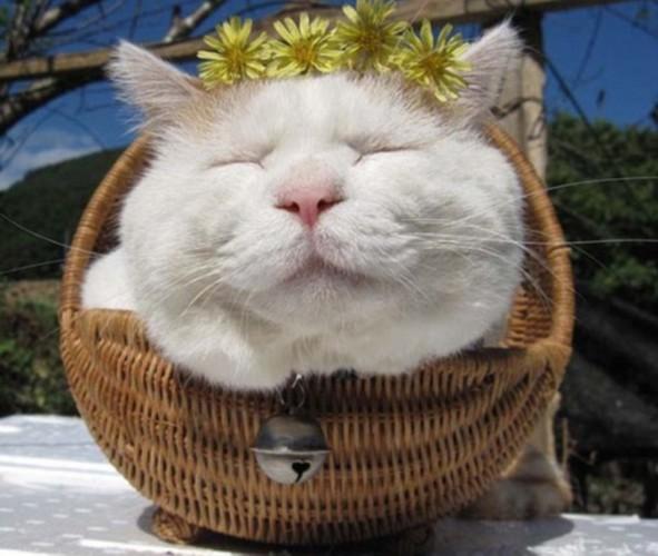 超萌可爱猫咪睡觉