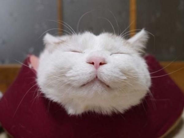 """日本小猫闭眼""""微笑"""" 可爱表情萌翻网友(高清组图)"""