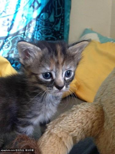 英国一表情最a表情小猫网路爆红被送绰号无比三国无双真7qq表情包图片