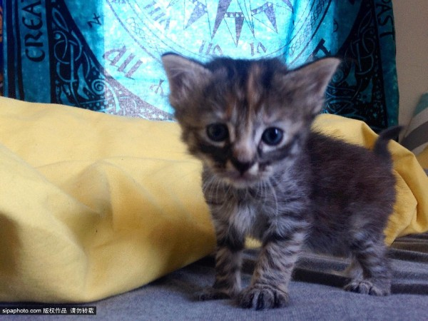 英国一表情最a表情小猫网络爆红被送绰号无比假表情真包图片