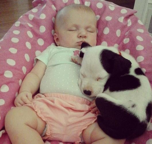 据英国《每日邮报》7月25日报道,近日,美国北卡罗莱纳州10周大的女婴艾斯利(Eisleigh)与她的完美睡眠伙伴小斗牛犬克莱德(Clyde)一起偎依而眠的画面走红网络。一组家庭照片和录像记录了艾斯利与小狗相互依偎的各种可爱姿势。   艾斯利25岁的母亲布兰迪利霍奇斯(Brandi Leigh Hodges)称,艾斯利与小狗保持着有趣的关系,他们相互欣赏。在近期的摄像中,小宝宝和小狗在婴儿车中相互依偎,小狗的鼻子搭在微笑的艾斯利头上。之前,小狗跳上了婴儿车并将自己蜷成一个舒服的睡眠姿势。艾斯利