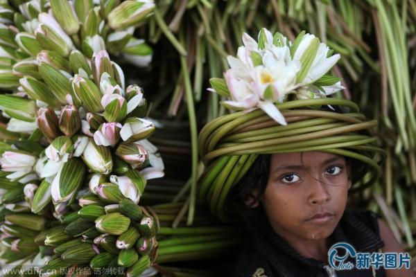孟加拉国:采睡莲的孩子(高清组图)