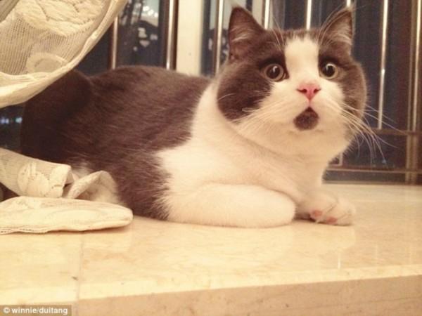 可爱猫咪的超萌表情