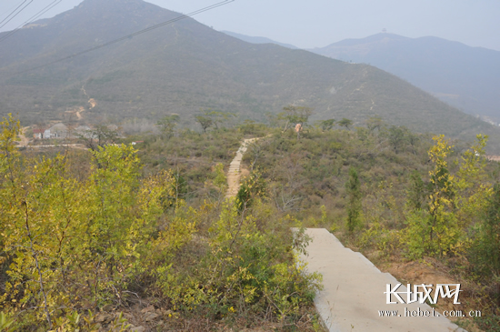 石家庄鹿泉西山森林公园,望着满山栽植的侧柏、火炬、毛白杨高清图片