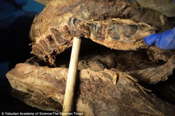 蜥蜴心脏结构示意图