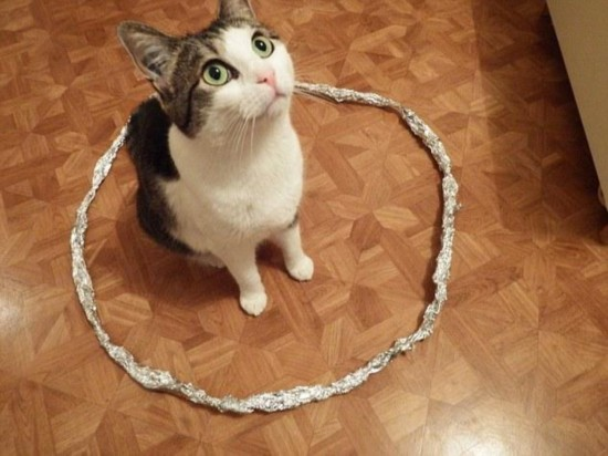 快进圈里来! 猫咪钟爱圆圈引发网友一探究竟_