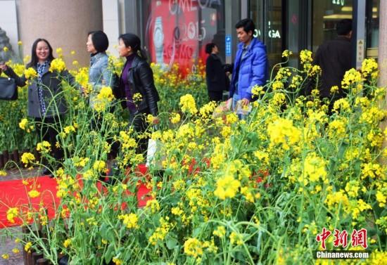 湖北/原标题:湖北一商场将油菜花种到门口吸引顾客