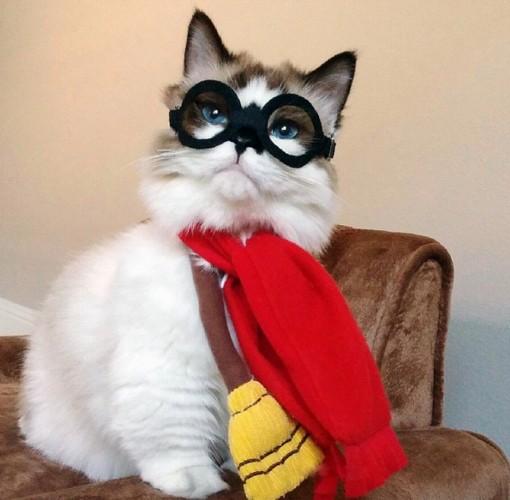 美国小猫扮电影角色 明星装扮爆红网络(组图)