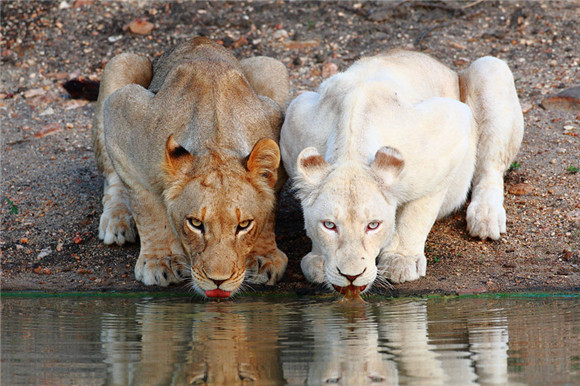没有色彩的动物同样很美_新闻中心_中国网