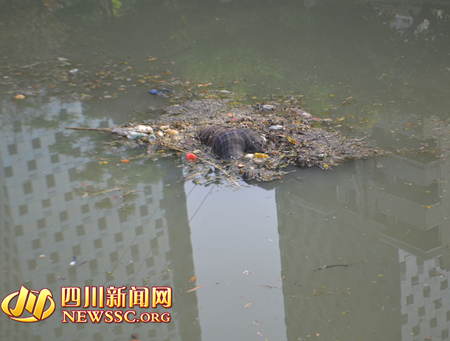 一具女性尸体漂浮在河中