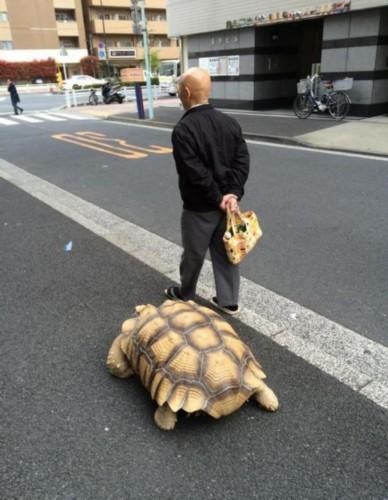 日本街头现真人版龟仙人:老爷爷悠闲遛乌龟【图】 - 施来村 - 上下四方宇的博客