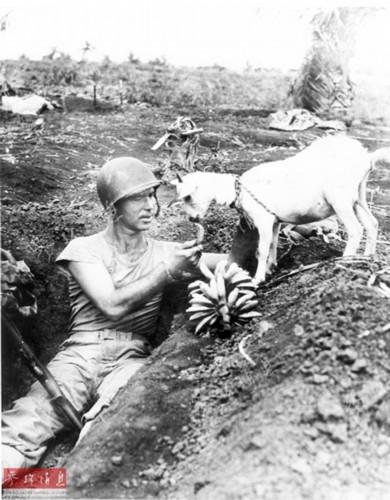 二战动物兵:大象给飞机搬油桶棕熊扛炮弹