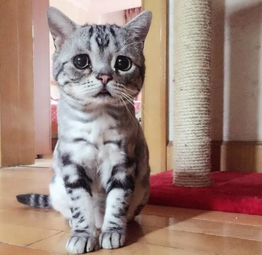 据英国《每日邮报》报道,中国一只名叫luhu的小猫因其一脸忧伤的神
