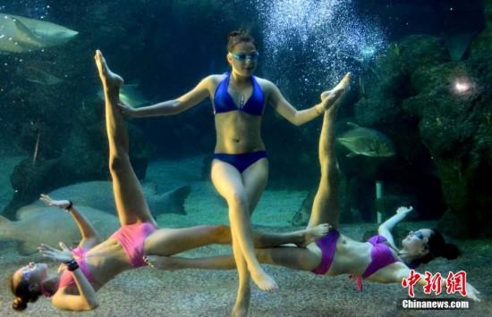 8月1日,盛夏炎炎,来自俄罗斯远东奥林匹克中心水下芭蕾表演队的美少女们,潜入福州左海海底世界与鲨鱼、海龟等海洋动物一起演绎精彩绝伦的水下芭蕾。8月1日,来自俄罗斯远东奥林匹克中心水下芭蕾表演队的美少女们,潜入福州左海海底世界与鲨鱼、海龟等海洋动物一起演绎精彩绝伦的水下芭蕾。