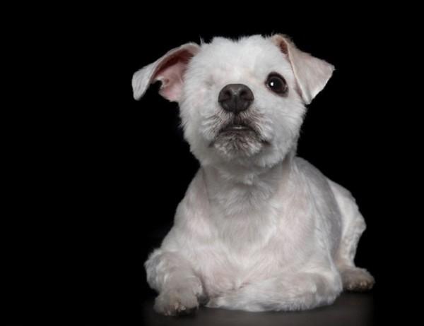 完美的缺陷:澳摄影师为残疾小动物拍暖心写真(组图)