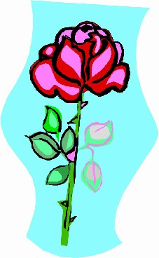 美艳野蔷薇