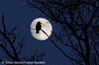 圖文:EricHosking獎-月亮和烏鴉