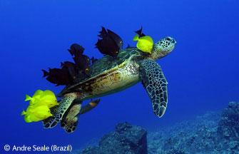 圖文:動物行為組(其他)-海龜