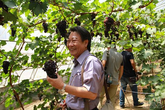 Kevin Chung, Chair of the AIPH Exhibitions Committee, is picking grapes in International Grape Expo Garden.