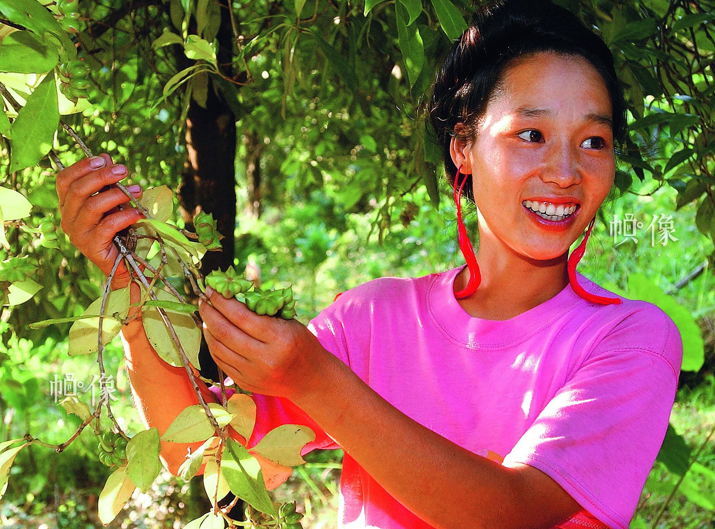 兰仙英,红瑶族,曾在广西融水县白云乡中心校第一届红瑶女童班就读,1996年9月初中毕业后一直在家务农,种植八角经济作物,她家成为村里最富裕的家庭。她还带动和帮助村里的人一起种植经济作物,是村里唯一的女党员。中国儿基会供图