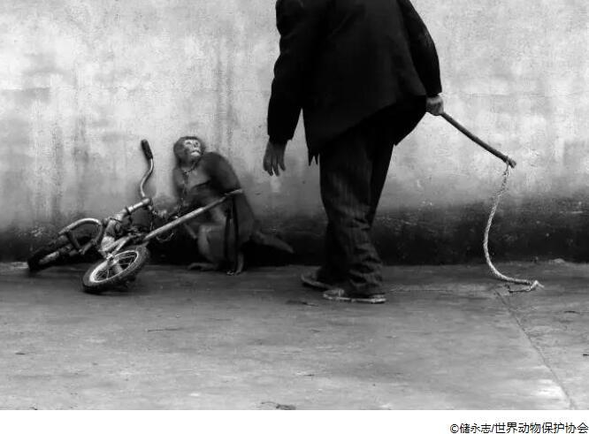 "da9b6d49 1bba 4bef b5f0 41fe4b73e31e - Spring Festival travel tips: help you become ""animal-friendly"" tourists-China Net"