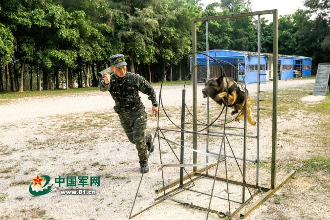 """在""""雪豹突击队""""训警犬,是怎样一种体验"""