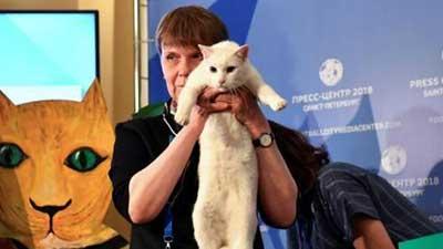 接班章鱼保罗 猫咪担任今年世界杯官方预言家
