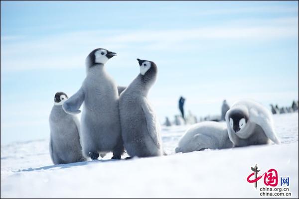 暑期跳入极限清凉的童话世界 开启南北极大冒险
