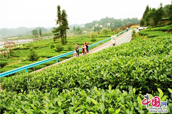 四川蒙顶山世界茶之源 品味雾本茶感悟人生路