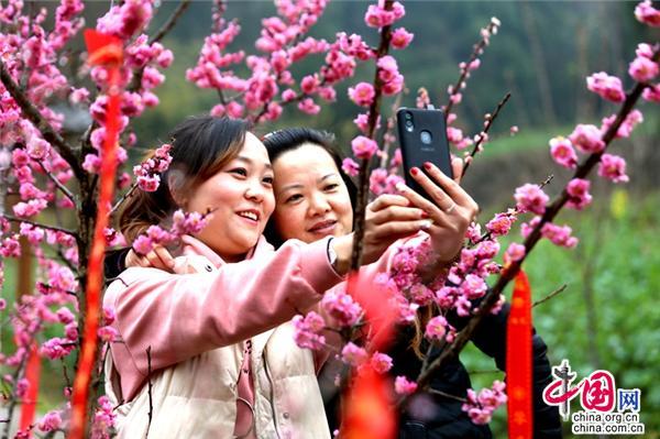 四川广元:柏林沟樱花盛开 数千游客前来