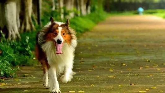 英国去年宠物保险支出达近8亿英镑 大力发展第三产业