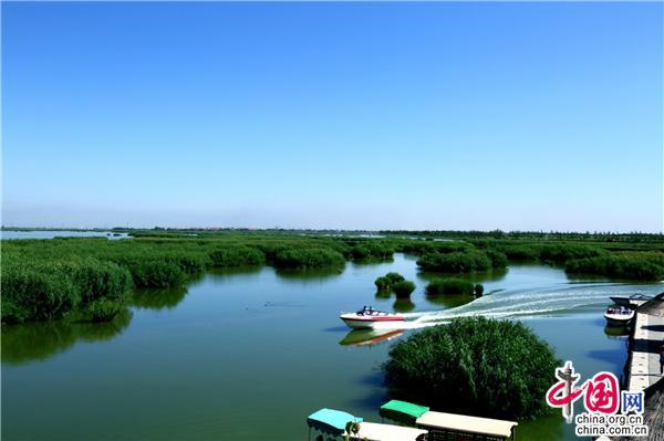 宁夏沙湖:感受碧水荡漾 芦苇簇簇的风情