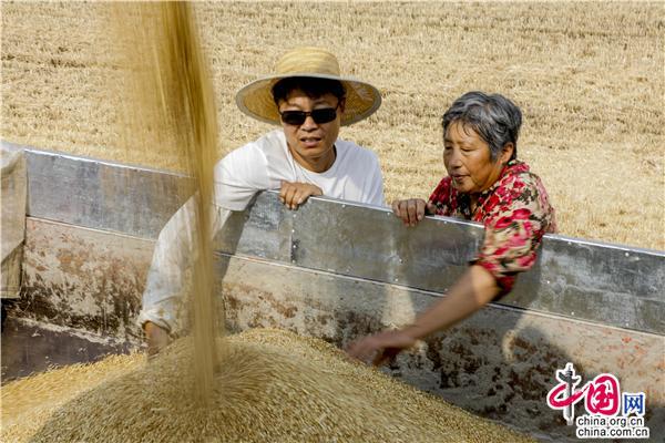 青岛徐村:麦浪滚滚丰收来 绘制乡村麦收新图册_旅游中国_中国网_中国旅游外宣第一品牌