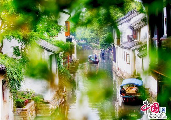 夏日周莊:船上渡時光,水上看風光(圖)