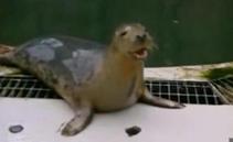 英国:学习能力开挂  海豹会唱《小星星》 精彩视频网站