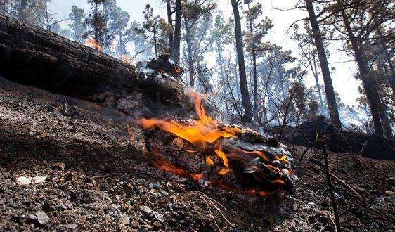 西班牙多处山火烧毁1万多公顷森林 朱�F基答记者问视频