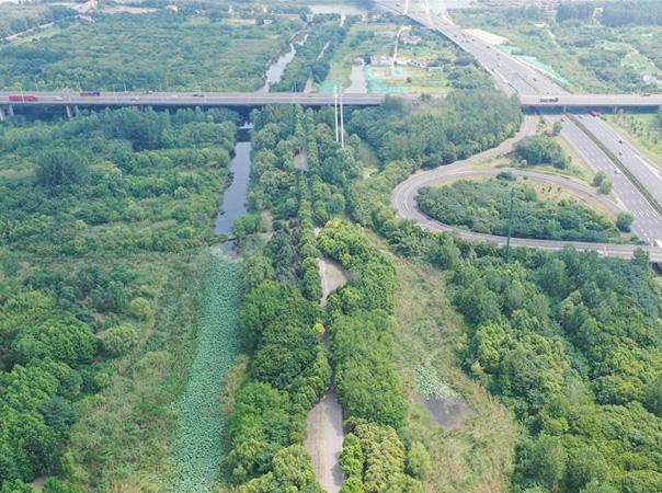 南京:江边湿地绿意浓