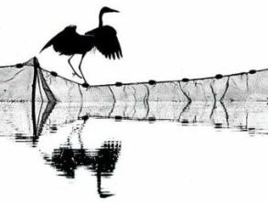鸟类摄影师大赛杰作