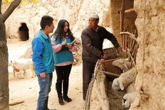 """冬日暖""""羊羊"""" 碧桂园重庆区域"""