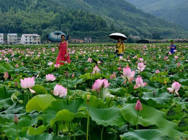 福建武夷山:世界遗产 绿水青山