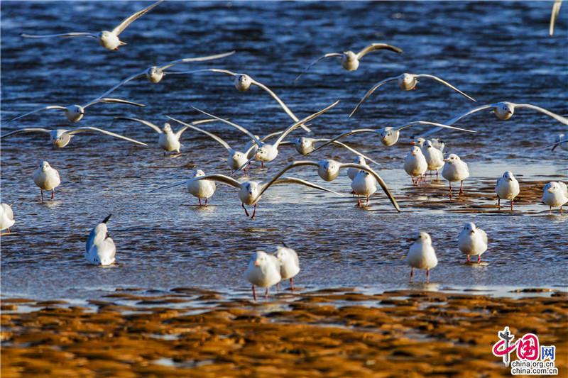青岛西海岸冬季海滨风景_新城蓝海的曼妙相拥