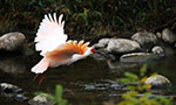 中国濒危野生动植物种群总体稳中有升